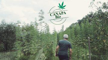 CanapaBio